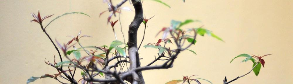 Der Baumvogel Blog